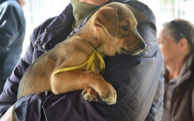 Sábado tem Feira de Adoção de Cães e Gatos em Pinhais