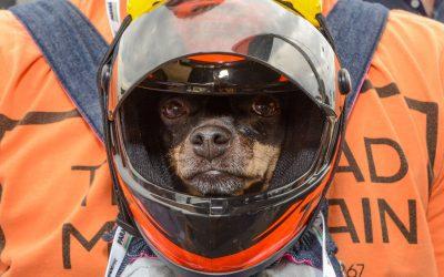 MotoCão arrecada ração para animais em situação de vulnerabilidade
