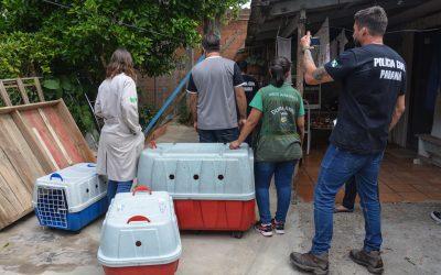 Divisão de Bem Estar Animal descobre canil clandestino em Pinhais